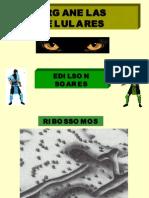 Biologia PPT - Organelas Celulares