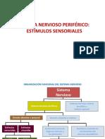 Tema5-SistemaNervioso2