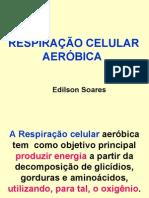 Biologia PPT - Respiração Celular Etapas