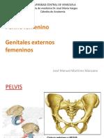 clase_perine_femenino_y_genitales_externos.pdf