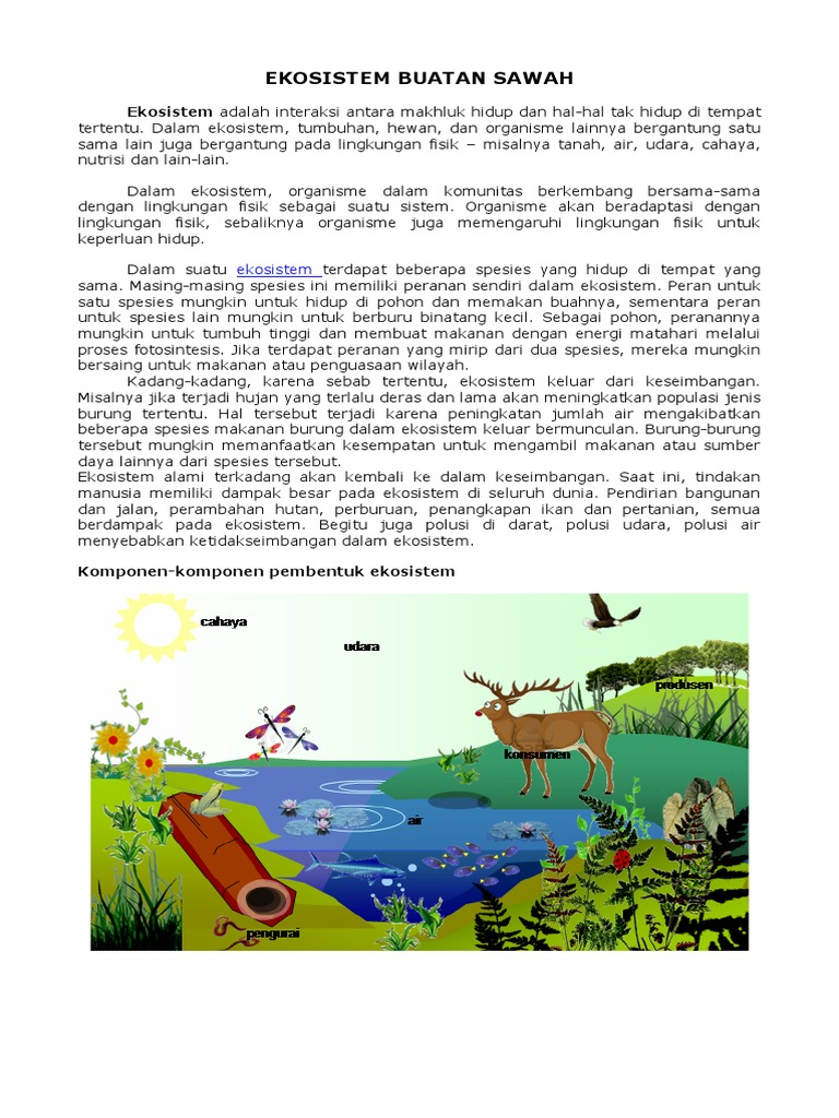 Ekosistem Buatan Sawah