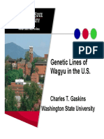 Genetic Lines of Wagyu in the US