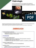10-desarrollo embrionario
