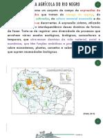 Sistema agrícola do Rio Negro