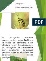 Tortuguilla