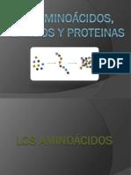 Expo-Organica3_los Aminoácidos, Peptidos y Proteinas