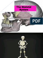 skeletal system ppt
