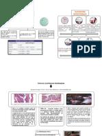 Tipos de Clostridium Perfringens