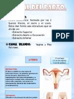 Clinica II