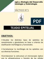 Tejido epitelial Práctico