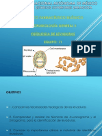 FISIOLOGÍA DE LAS LEVADURAS