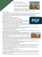 Cómo Sobreviven Los Camellos en El Desierto