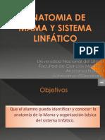 Anatomia de Mama y Sistema Linfático