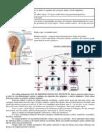 Hematologia M7 - Aula 1 e 2 - Hemoterapia e complicações.docx