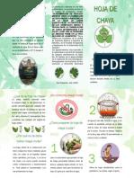 triptico chaya.pdf