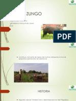 Cerdo Zungo