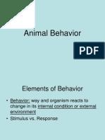 animal behavior 2018