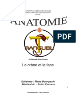 Anatomie Dent-systeme Osseux Introduction Osteologie