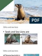 seals sea lions