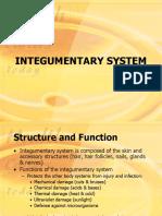 Integumentary System 24