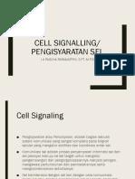 Cell Signal Dan Kortikosteroid
