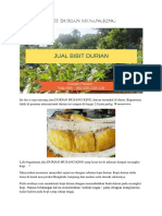 ASLI..!Hp/Wa 0822-2022-8118,  Jual Bibit Durian Musang King, Bibit Durian Musang King Asli