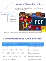 U3b_MicroorganismosQuimiolitotrofos_20149.pdf