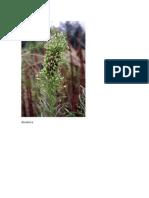 especies flora macaronésia
