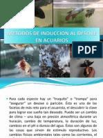 METODOS_DE_INDUCCION_AL_DESOVE_EN_ACUARIOS[1]