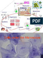 Biology - Structure & Function of Cells