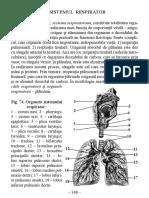 2.Sistemul_respirator.pdf