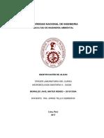 IDENTIFICACIÓN DE ALGAS - Tercer Laboratorio de Microbiología Sanitaria II