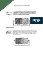 Tipos de Polarización Del Diodo