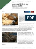 G1 - Cogumelos rendem até R$ 4 mil por semana a produtores do RS - notícias em Campo e Lavoura