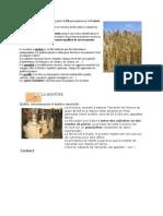 Le meunier produit de la farine à partir de blé principalement et d
