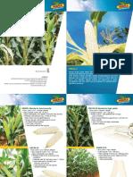 Dekalb Brochure