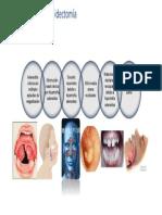 AdenoidEctoMia
