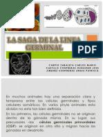 LA SAGA DE LA LINEA GERMINAL.pptx