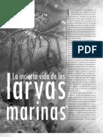 Larvas Marinas y Oceanografia