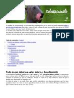 Xoloitzcuintle Xolotl Anubis. Perro Mexicano. Pensar Cuesta Creer Es Gratis. Antropología y Símbolo