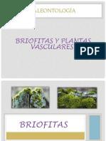 Briofitas Y Plantas Vasculares (1)