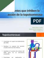 topoisomerasa