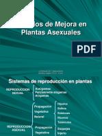 Mejoramiento Genetico en plantas Asexuales