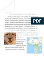 Cheetah Paper