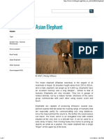 Asian Elephant - WWF.pdf