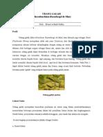 Mengenal lebih jauh tentang Udang Galah (Macrobrachium Rosenbergii de Man)