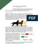 Interacción Génica Con Epistasia2014519-1820