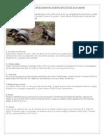 Animales en Peligro de Extincion Con Foto
