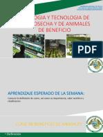 clase8_beneficio de animales.pdf