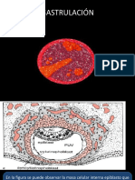 Gastrulación y Neurulación(3).pdf